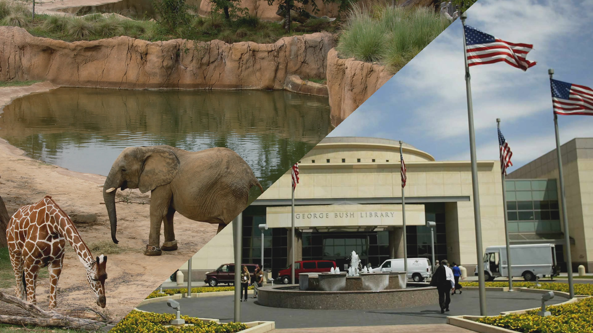 The world-class, 106-acre Dallas Zoo is the largest in Texas and features many rare and endangered species.