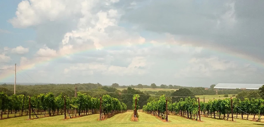 Arché Winery & Vineyard