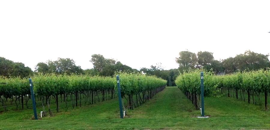 Eden Hill Estate Vineyard